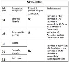 Adrenergic receptor - Wikipedia