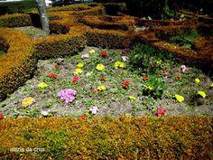 Florinhas do jardim da Guarda