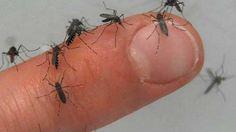 63 casos de dengue y uno de Chikungunya en Puebla: SSA