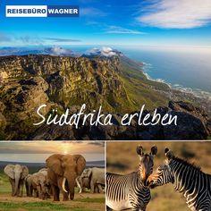 Unvergessliche Safaris 🦒🐘, Wein vom Kap 🍇, der Sand unter den Füßen an traumhaften Stränden ⛱ - mit einem Afrikaurlaub buchen Sie eine extrem faszinierende Vielfalt. Wir sorgen dafür, dass Ihr Afrikaurlaub zu einem unvergesslichen Erlebnis wird und stellen Ihnen gerne Ihre individuelle Reise zusammen! 😃 #ReisebüroWagner #Werne #Urlaub #Fernreisen #Südafrika Safari, Strand, Art, Wine, Art Background, Kunst, Performing Arts, Art Education Resources, Artworks