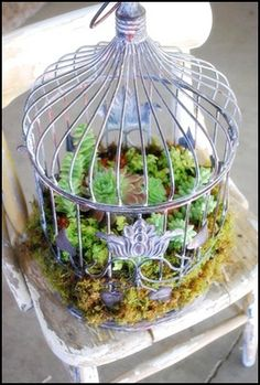 Birdcage filled with succulents