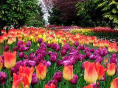 Images of Roozengaarde Display Garden, Mount Vernon - Attraction Pictures - TripAdvisor