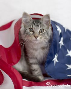 Lincoln (Tiffany X) - Lincoln is wrapped up in supporting his country.  (pic by Rachael Hale)