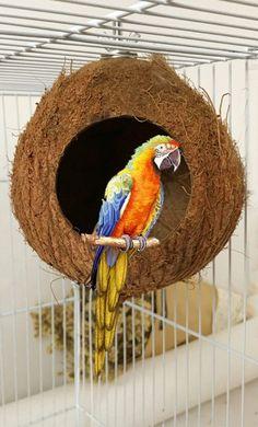 Советы по правильному выбору попугая от ветеринара