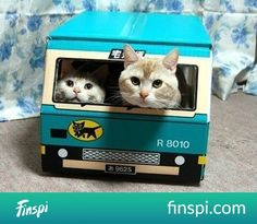 get out of the way! #koty #autobus #cat bus