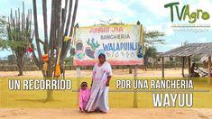 Un recorrido por una Ranchería Wayuu - TvAgro por Juan Gonzalo Angel