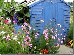 How to get an allotment Allotment Plan, Allotment Gardening, Blue Garden, Home And Garden, Allotment Ideas Inspiration, Vegetable Garden, Garden Plants, Blue Shed, Growing Peas