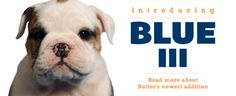 Butler University and their new mascot Blue III - Indianapolis, IN