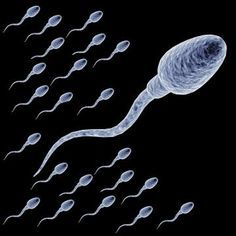 Home Remedies to Increase Sperm Count and Motility