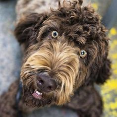 Can Dogs Recognize Their Owner's Face? | Canidae Blog
