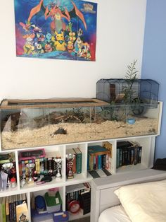 Page 842 of 843 - Proud of your hamsters cage - posted in Supplies & Accessories: Awe thanks CC~.