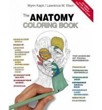 FREE: Anatomy Coloring Book | Stuff to Buy | Pinterest | Anatomy and ...