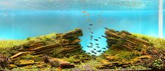 These dreamlike, underwater landscapes were created by experts in aquascaping and are true works of art!