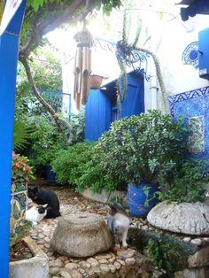 Kitties on the stone patio