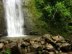 Aren't Manoa Falls beautiful?