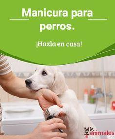 Manicura para perros. ¡Hazla en casa! Para que no se vaya tanto dinero, te enseñamos cómo puedes hacer la manicura de tu perro tú mismo. Toma nota, coge las tijeras y ¡vamos allá! #manucure #perro #encasa #alimentación