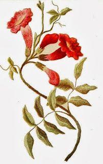 Free Vintage Images: Vintage Flower Images - Trumpet Vines