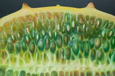 Horn Melon series - Dennis Wojtkiewicz - oil on canvas Food Art Painting, Fruit Painting, Dennis Wojtkiewicz, Vegetable Drawing, Strange Fruit, Plant Projects, Fruit Pattern, Art Themes, Patterns In Nature