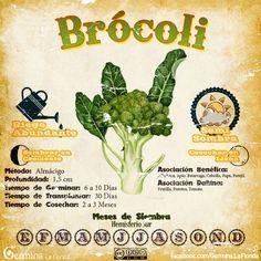 Brocoli2.jpg (700×700)