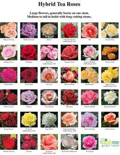 Hybrid Tea Roses Chart