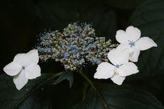 awesome flowers #nature #botanicalgarden