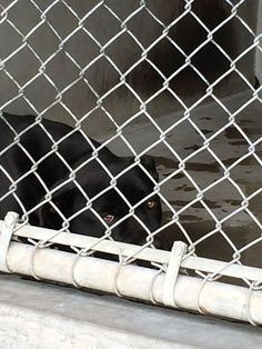 ***SUPER URGENT- SAD,  HANDSOME OREO!!!! SUPER SWEET IN HIS VIDEO! SCARED but VERY CALM GENTLE LOVES AFFECTION!  SHARE PLEDGE FOSTER ADOPT RESCUE!!!!  Oreo has been sitting at SBC since 12/9 and NEVER put on petharbor.  I am a male, black and white Pit Bull Terrier.   Shelter staff think I am about 2 years old. at San Bernardino City Shelter - Phone: 909-384-1304, Address: 333 Chandler Pl., San Bernardino, CA 92408.