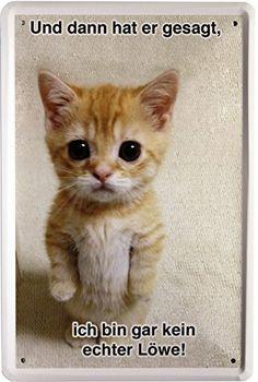 Blechschild Spruch Katze Cats 20 x 30cm Reklame Retro Blech 1251: Amazon.de: Küche & Haushalt