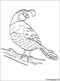 Quail Coloring Pages For Kids