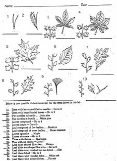 Here\'s a dichotomous key for identifying organisms from the planet ...