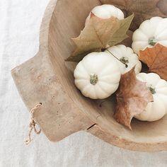 little white pumpkins Soft Autumn, Autumn Day, Hello Autumn, Autumn Home, Autumn Leaves, Winter, Autumn Nature, Autumn Aesthetic, White Pumpkins
