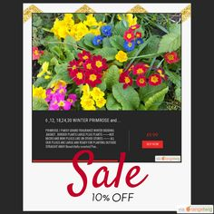 10% OFF on select products. Hurry, sale ending soon!  Check out our discounted products now: https://orangetwig.com/shops/AAB5v98/campaigns/AACeg99?cb=2016004&sn=RetroDIYandPlants&ch=pin&crid=AACeg5I&utm_source=Pinterest&utm_medium=Orangetwig_Marketing&utm_campaign=SPRING_GARDEN_PLANTS