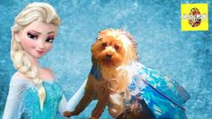 """So adorable! You might wonder if little yorkie Elsa wants to build a snowman in that cute li'l costume. The cold never really bothered this little one anyway. A dream come true for this yorkie to be fab and famous while living a kind of exciting life as the Snow Queen """"Elsa"""" in the movie """"Frozen"""". For a character so enchanting and magical as this, little yorkie portrayed it hilariously in this short film."""