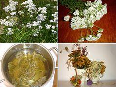 Herb Garden, Terrarium, Herbs, Home Decor, Terrariums, Decoration Home, Room Decor, Herbs Garden, Herb
