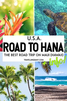 The most beautiful spots on the road to Hana (Maui, USA)! Probably the most amazing road trip in Hawaii, featuring luscious forests, breathtaking views on the coast, waterfalls, rare trees, and a bamboo forest which looks like the one in Kyoto (Japan)! Le