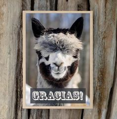 """Alpaca Greeting Card , 5x7, Blank Inside """"Gracias"""" on the cover, blank inside. Overview - Handmade item - Style: Individual Notecard - Materials: recycled paper, kodak lustre, photography paper, non g"""
