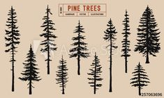 Pine tree silhouette vector illustration hand drawn - Buy this stock vector and ., , Pine tree silhouette vector illustration hand drawn - Buy this stock vector and explore similar vectors at Adobe Stock Tree Silhouette Tattoo, Pine Tree Silhouette, Silhouette Vector, Pine Tattoo, Kiefer Silhouette, Kiefer Tattoo, Alpine Tree, Natur Tattoos, Tree Sketches