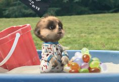 Compare the Market - Compare the Meerkats Baby Meerkat, Compare The Market, Favorite Cartoon Character, Family Album, Cartoon Characters, Teddy Bear, War, Sloths, Pets