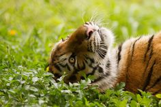 Photograph Daydreamer by Ashley Vincent on 500px