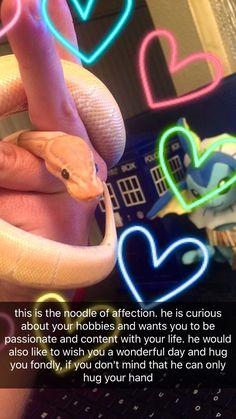 reblog for a happy noodle of affection happy snek good snek