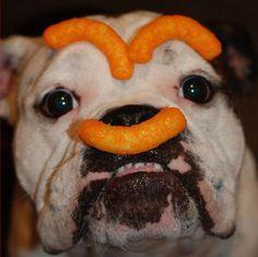 cheetos bullie!