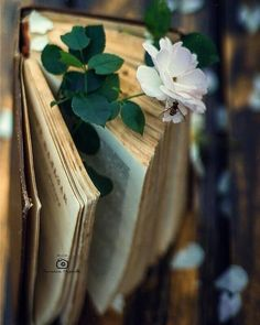 old books and old roses Flower Aesthetic, Book Aesthetic, Aesthetic Pictures, Still Life Photography, Book Photography, Creative Photography, Old Books, Vintage Books, In This World