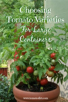 Grow Organic Tomatoes Growing tomatoes in pots: the basics about container tomatoes with Tomato Dirt Patio Tomatoes, Growing Tomatoes Indoors, Tips For Growing Tomatoes, Growing Tomato Plants, Growing Tomatoes In Containers, Growing Vegetables, Large Containers, How To Plant Tomatoes, Container Vegetables
