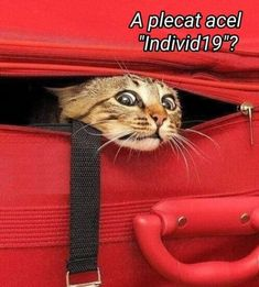 Our collection of funny cat jokes and cat jokes for kids will make any grumpy cat laugh. Animals And Pets, Baby Animals, Cute Animals, Funny Cat Jokes, Funny Cats, Beautiful Creatures, Animals Beautiful, Cats For Sale, Grumpy Cat