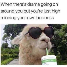 19 Hilarious Llama Pics and Memes - Funny Animal Memes, Funny Animal Pictures, Funny Animals, Animal Jokes, Life Memes, Daily Memes, Llamas, Memes Humor, Funny Memes