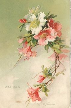 Картинки по запросу vintage flowers