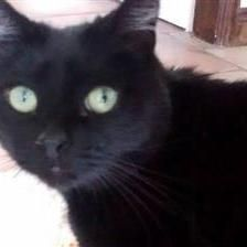 Gizmo - Cat Rehoming & Adoption - Wood Green Animals Charity