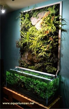 great idea for artfully presenting our lygodactylus vivariums