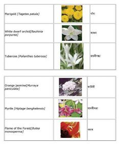 English Bengali Grammar Flowers English To Bangla Meaning Flower Names Flowers Name In English Flowers