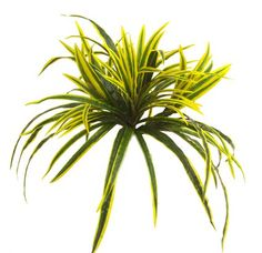 Artificial Dracaena Plant. Perfect for adding some colour and texture to your planting displays