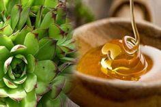A kövirózsa levelében lévő szupererős természetes orvosság hasonló hatású, mint a világszerte ismert és kedvelt aloe vera.  A kövirózsa levelet mézzel összekeverve különböző betegségek gyógyítására használják, de a leghatásosabb a mióma és ciszta eltávolítására. Hozzávalók: - 500 g méz -300 g kövirózsa levél Elkészítés: A kövirózsa leveleket mosd meg, itasd le róla a felesleges vizet, majd turmixgépben, vagy darálóban őröld meg. Fa vagy műanyag kanállal (ne fémmel!) keverd el benne a…